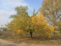 Schöner und frischer Herbstwald im Sonnenlicht Lizenzfreie Stockfotos