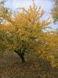 Schöner und frischer Herbstwald im Sonnenlicht Stockfotos