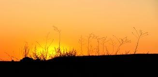 Schöner und heller Abendsonnenuntergang in der Wüste Stockbilder