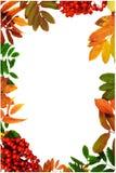 Schöner vertikaler Herbstrahmen gemacht von den bunten Blättern und von den Ebereschenbeeren Stockfotografie