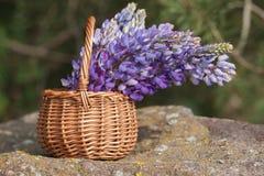 Schöner violetter Lupineblumenstrauß im Korb auf dem Freilicht Lizenzfreie Stockfotografie