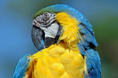 Schöner Vogel. Stockfoto