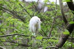 Schöner Vogel Lizenzfreie Stockfotografie