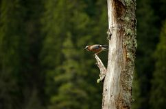 Schöner Vogel Stockfoto