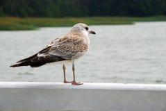 Schöner Vogel Stockbild