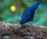 Schöner Vogel lizenzfreie stockfotos