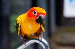 Schöner Vogel lizenzfreie stockbilder