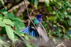 Schöner Vogel stockbilder