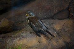 Schöner Vogel auf Hintergrund Stockbilder