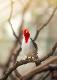 Schöner Vogel auf Niederlassung Lizenzfreies Stockbild