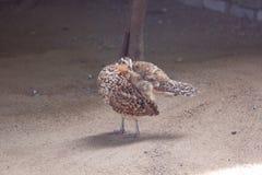 Schöner Vogel auf weißem Hintergrund Lizenzfreie Stockfotografie