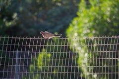 Schöner Vogel ist in Bahrain stockbilder