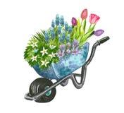 Schöner Vorfrühlingsgarten-Blumenblumenstrauß in einer Schubkarre vektor abbildung