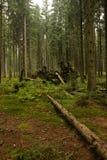 Schöner Wald Stockbild