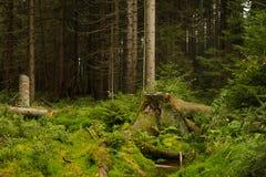 Schöner Wald Stockbilder