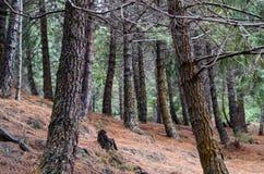 Schöner Wald auf den Anden-Hochländern lizenzfreies stockfoto