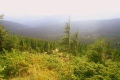 Schöner Wald in den Bergen Stockbilder
