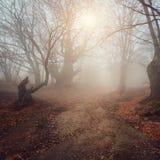 Schöner Wald des Herbstes stockbilder