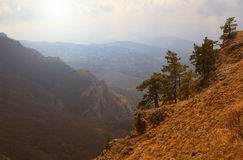 Schöner Wald des Herbstes Lizenzfreie Stockfotos