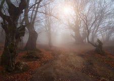 Schöner Wald des Herbstes Lizenzfreie Stockbilder