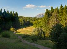 Schöner Wald des Sommers Stockbild