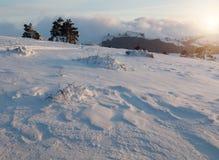 Schöner Wald des Winters Stockbild