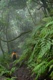 Schöner Wald an einem regnerischen Tag Wandernde Spur Ländlicher Park Anaga - alter Wald auf Teneriffa, Kanarische Inseln stockbild