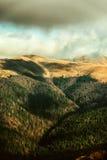 Schöner Wald im Sonnenlicht Stockfotos