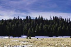 Schöner Wald im Winter lizenzfreie stockfotos