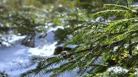 Schöner Wald im Winter in Kirchschlag-bei Linz in Oberösterreich stock footage