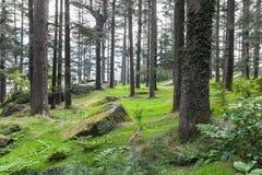 Schöner Wald, Manali Lizenzfreie Stockfotos