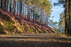 Schöner Wald mit blauem Himmel stockfotografie