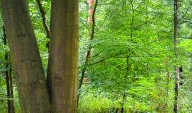 Schöner Wald mit dem hellen Sonnenschein, der durch die Bäume scheint stockfotografie