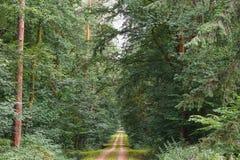 Schöner Wald mit dem hellen Sonnenschein, der durch die Bäume scheint Schotterstraße durch sonniges Grün lizenzfreie stockfotos