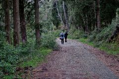 Schöner Wald mit einem Weg, den Touristen gehen stockfotos
