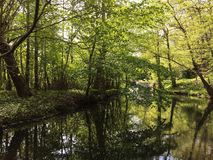 Schöner Wald mit Sonnenlicht in Dänemark nahe Kopenhagen lizenzfreie stockfotos