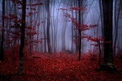 Schöner Wald während des Herbstes Lizenzfreie Stockbilder