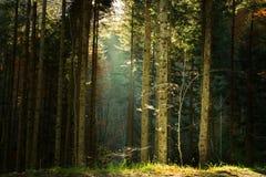 Schöner Wald während des Herbstes Lizenzfreies Stockfoto