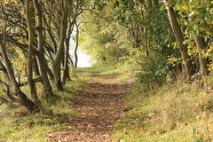 Schöner Waldweg Stockfoto