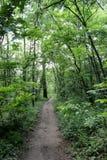Schöner Waldweg im Frühjahr stockbilder