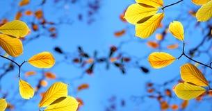 Schöner Washington Autumn Nature Scenery - Herbstlaub in Washington State stockfotos