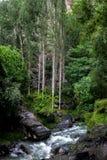 Schöner Wasser-Strom im grünen Wald zwischen großen schwarzen Felsen in Gilgit Pakistan lizenzfreie stockfotos