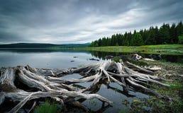 Schöner Wasserbehälter in den Erzbergen, Tschechische Republik Detail von Baumwurzeln im klaren Wasser Stockbild