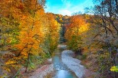 Schöner Wasserfall im Wald bei Sonnenuntergang Herbstlandschaft, gefallene Blätter Stockbilder