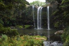 Schöner Wasserfall umgeben durch vibrierende Natur nahe Whangarei stockfotos