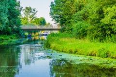 Schöner Wasserteich mit Brückengras und -bäumen Stockbilder