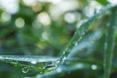 Schöner Wassertropfen stockbilder