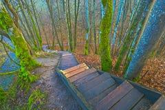 Schöner Weg durch Wald stockfotos