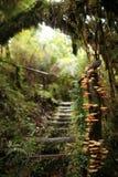 Sch?ner Weg mit Pilzen in Nationalpark Pumalin, Carretera Austral, Chile, Patagonia lizenzfreies stockbild