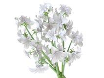 Schöner weißer Hyazinthe-Blumenstrauß Lizenzfreie Stockfotos